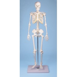 """Miniaturowy szkielet """"Tom"""""""