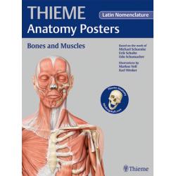 Plakat Anatomy Poster Prometheus Bones and Muscles